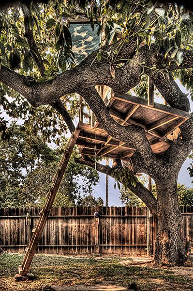 Avocado Tree House